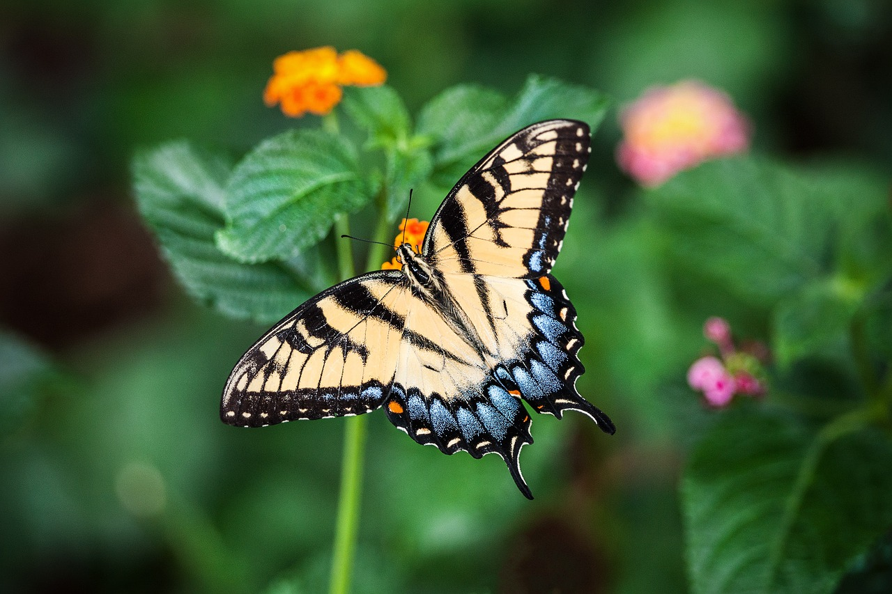butterfly alchemy for life coaching
